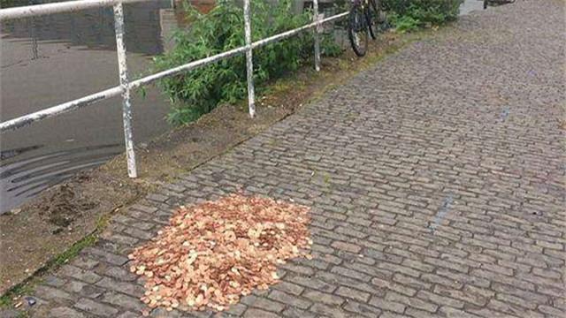男子路边放1.5万枚硬币测试路人反应