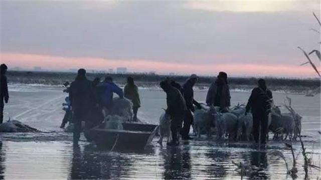 内蒙古:四百只羊被困黄河冰面
